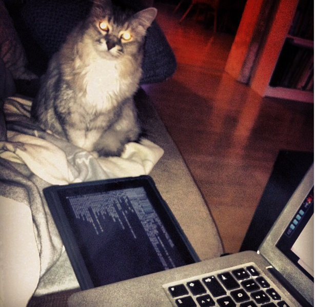 hackingcat
