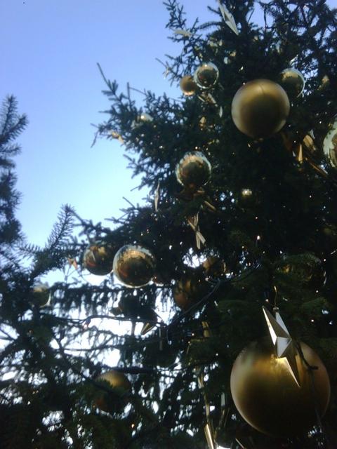 Einen Weihnachtsbaum zum Mitnehmen, bitte.