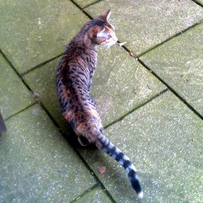 Katze entlaufen – Unterbilk