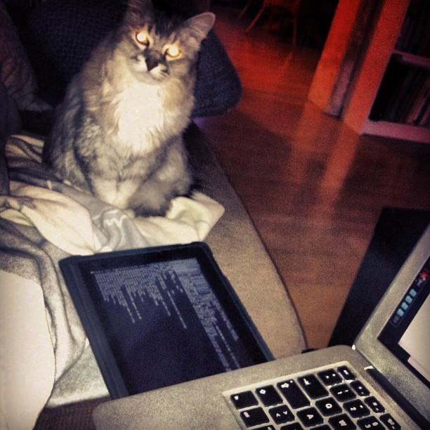 Jailbreak-Cat in Aktion ;-)