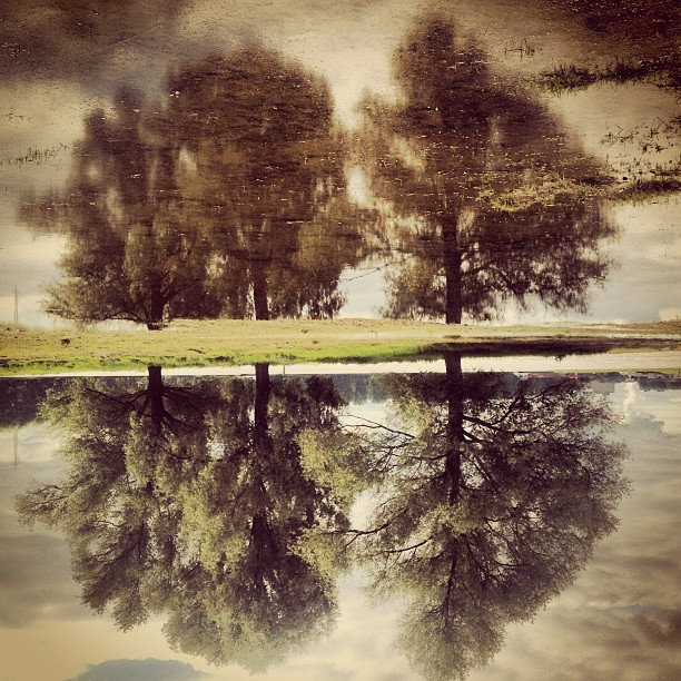 Projektionsfläche mit Bäumen.