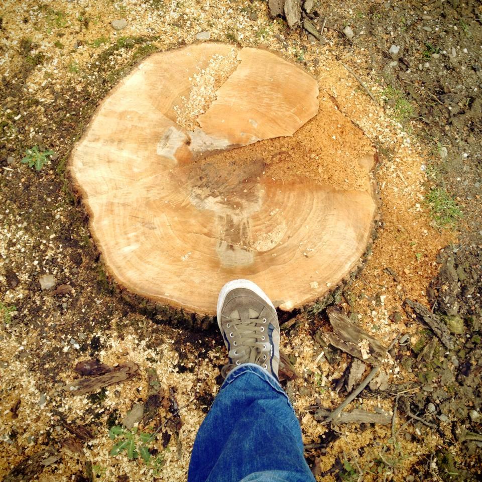 Unsere Stadtverwaltung hasst anscheinend alle Bäume