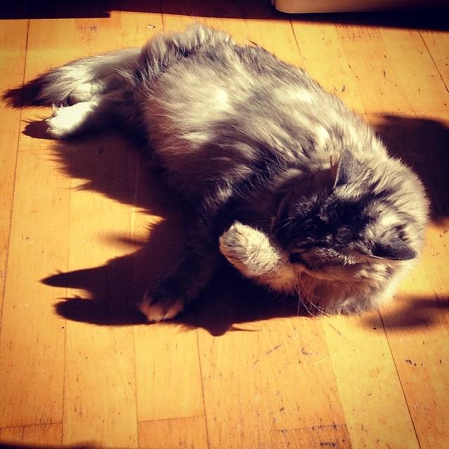 Sonnenanbeter mit Frühjahrsmüdigkeit…