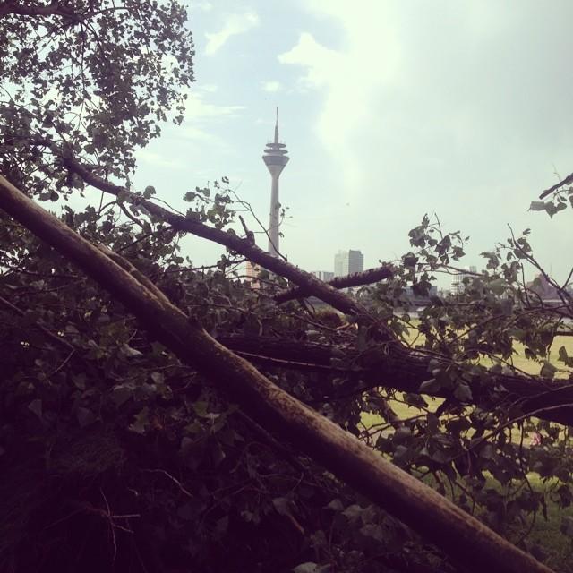 Mein Lieblingsbaum am Rhein ist umgefallen :-( och scheisse!