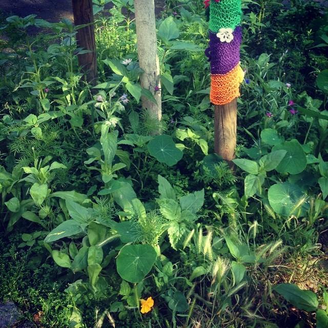 Der Blumenschmuck vorm Haus gefällt nicht nur den Bienen und unseren Amseln ;-)