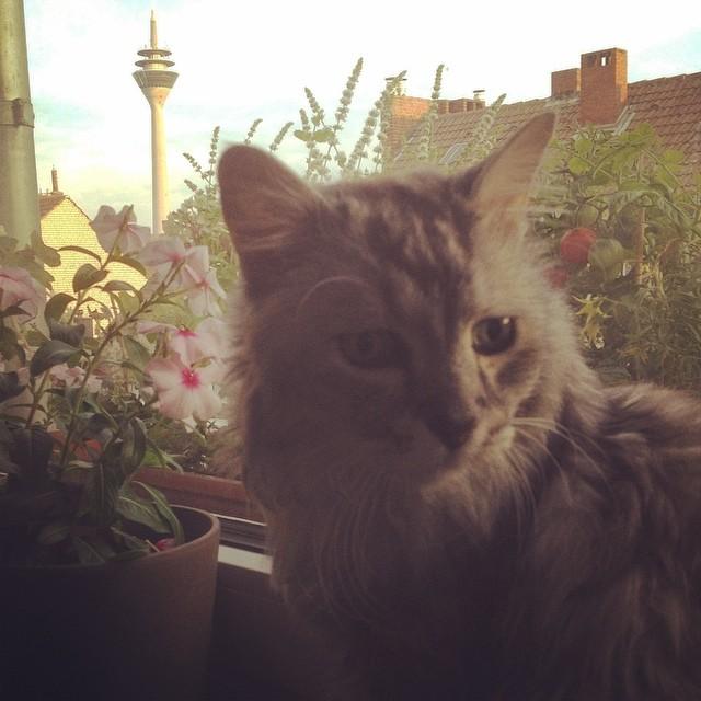 Einen schönen Weltkatzentag euch allen :-) #worldcatday