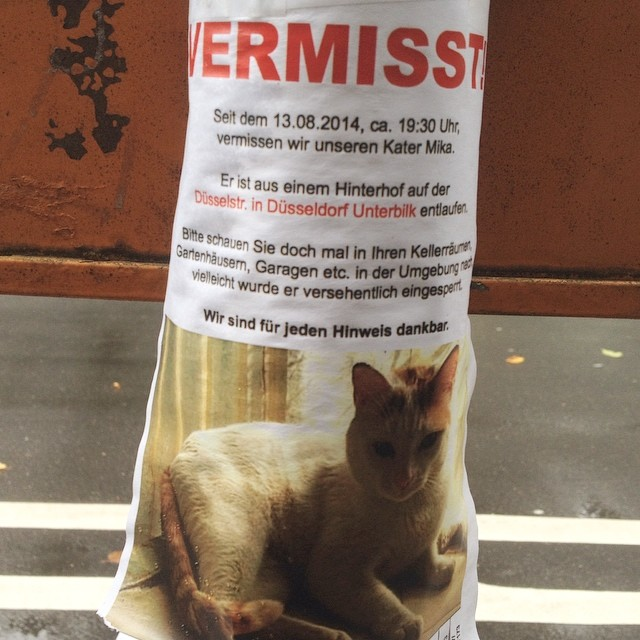 Bei uns im Viertel (Nähe Düsselstr. / LeoStatzPlatz) ist wieder eine Katze entlaufen…