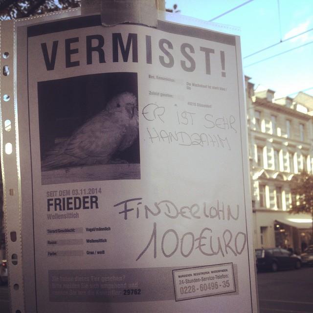 Falls euch ein Wellensittich in Bilk / Unterbilk / Friedrichstadt zugeflogen ist - der auf den Namen 'Frieder' reagiert - er wird vermisst...