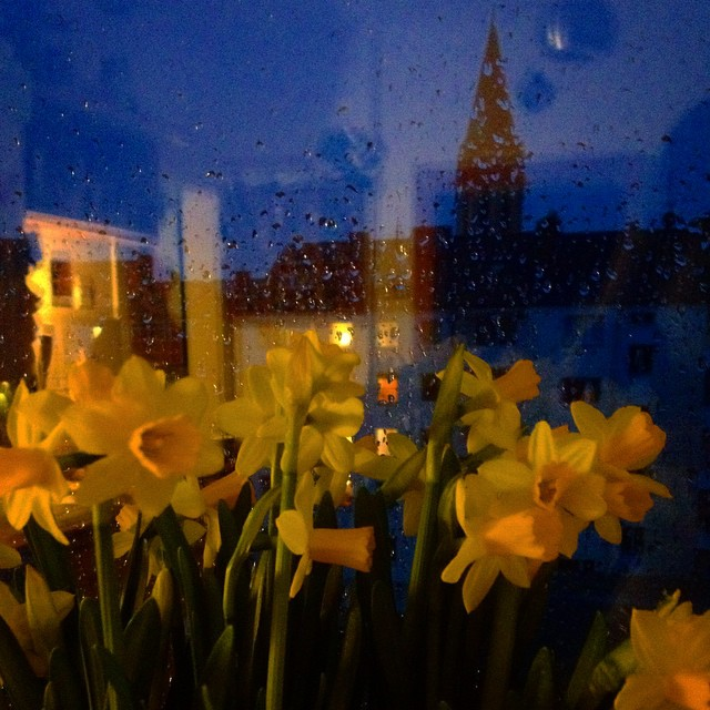 Frühling auf der Fensterbank – Kommt alle trotz usseligem Wetter gut in den Montag.