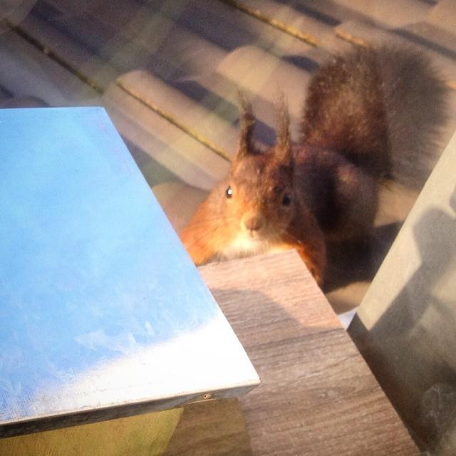 Unser Eichhörnchen ist ganz verwirrt…