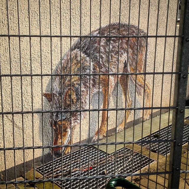 Ein kurzer Besuch des Wolf-Geheges in der Düsseldorfer Friedrichstadt lohnt sich immer...