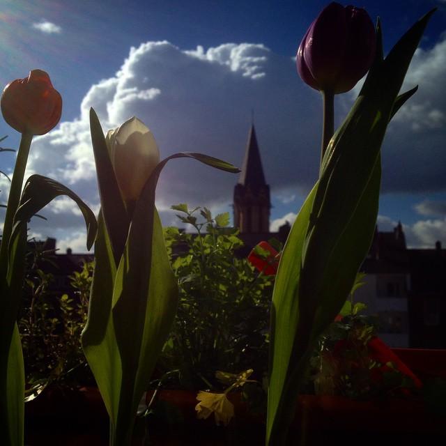 Frühlingsboten auf der Fensterbank...