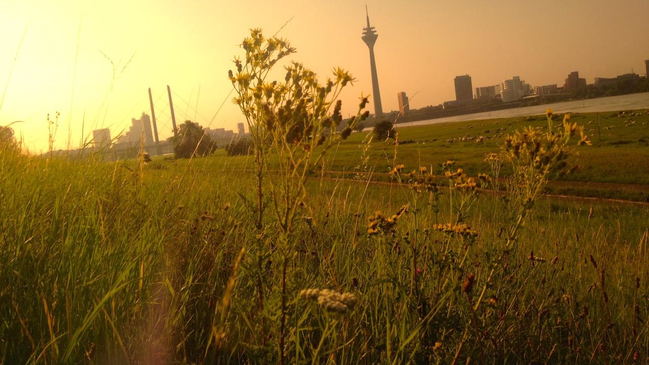 Für mehr Extensivgrünland in der Stadt