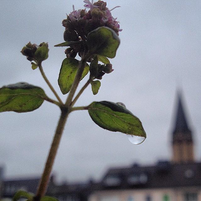 Endlich mal ein wenig Regen - Freude für alle Pflanzen, Agrarwirte (das waren doch früher Bauern oder?) und alle jene die mit Pollen zu kämpfen haben ;-)