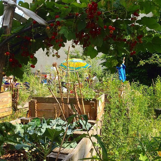 Tag der offenen Gartenpforte bei Düsselgrün - eine kleine grüne Oase mitten in der Stadt :-)