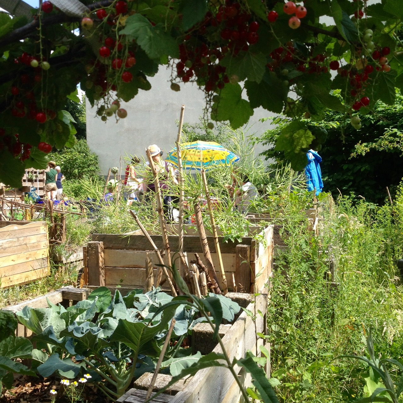Poetry meets Urban Gardening
