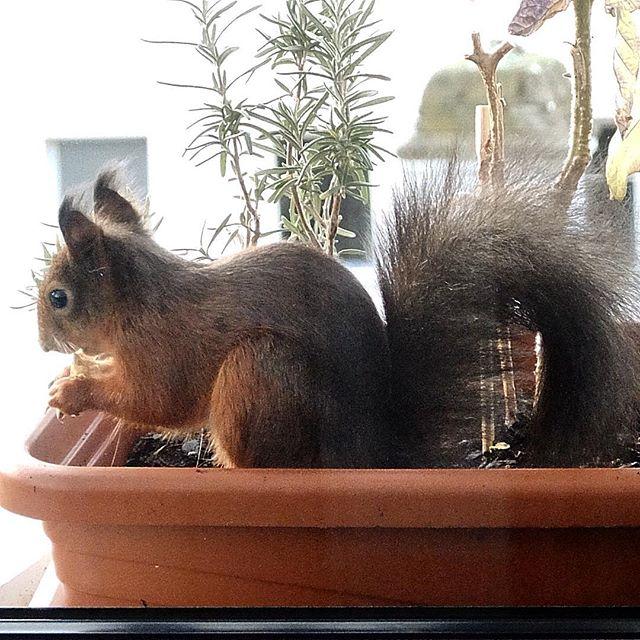 Auch Eichhörnchen brauchen mal eine Pause...