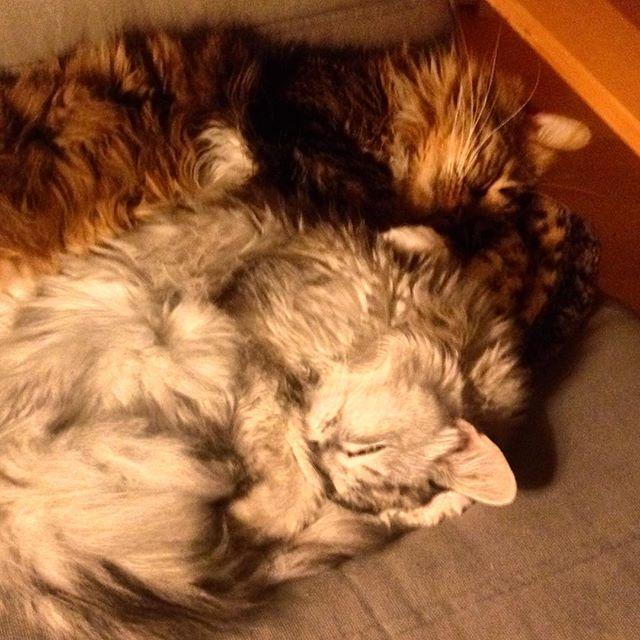 Boah, einfach mal am Montag so liegenbleiben können... Katze müsste man sein.