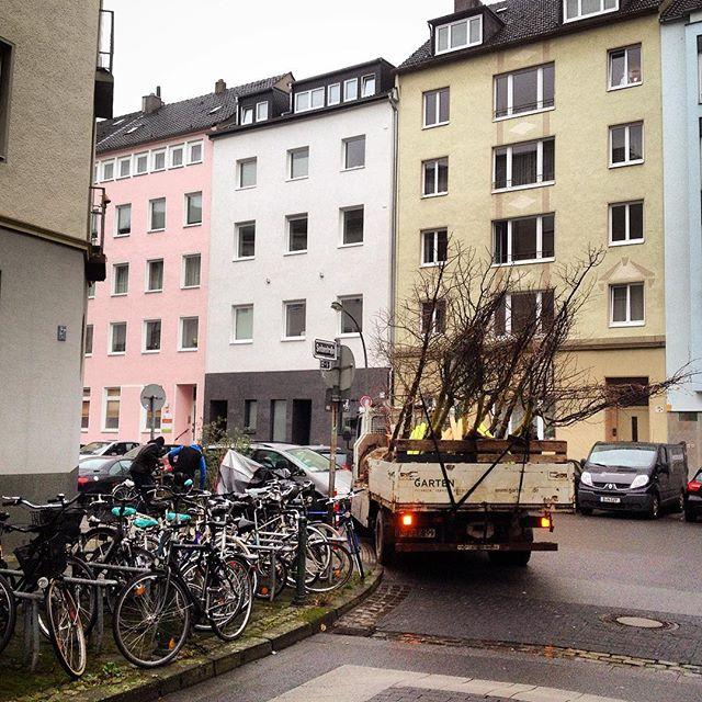 Es wird bald Frühling, die Bäume schl…. ähm … werden ausgesetzt :-)