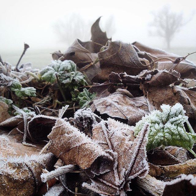Frostig, frische Morgenstimmung im Rheinbogen.