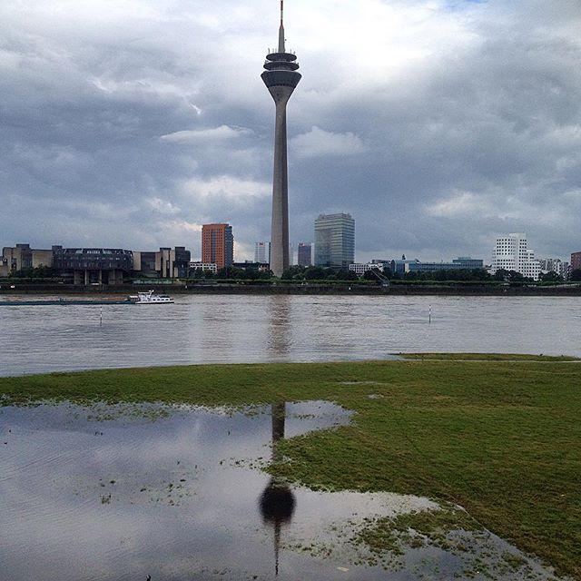 Wasserspiegelung mit Rheinwiese.