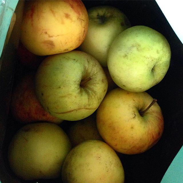 Apfelernte :-) Haben gestern von einem Freund eine Testauswahl seiner ersten, eigenen Äpfeln bekommen... Es ist abgedroschen dies zu sagen - aber sie schmecken einfach besser :-)