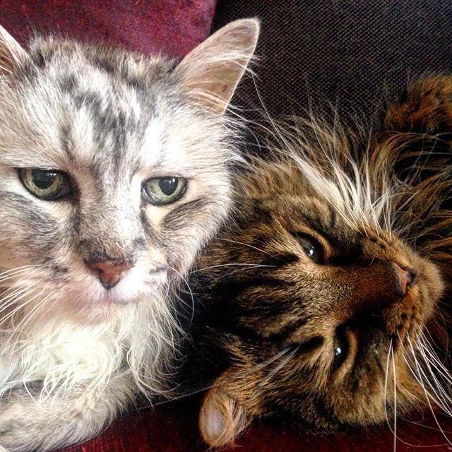 Katzen können anscheinend eine Welt sehen die sich knapp hinter der Schulter des Besitzers befindet...