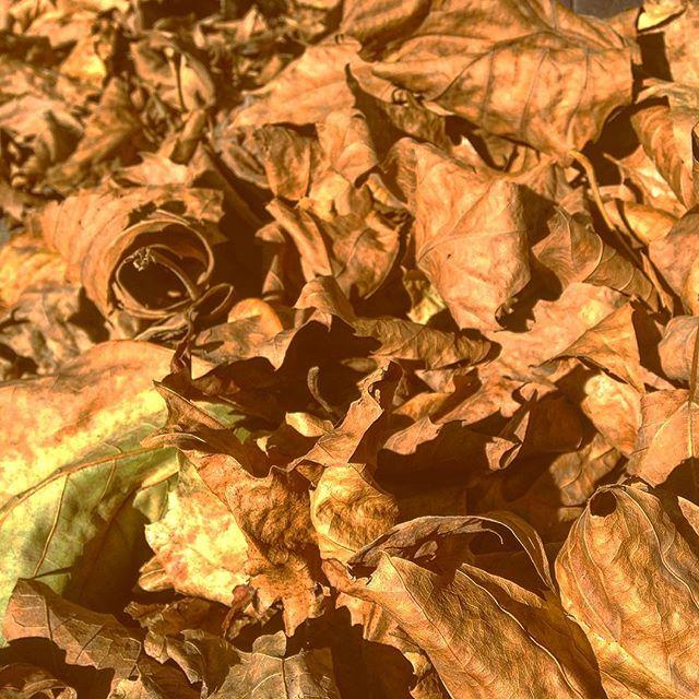 Bei all diesen vielen Blätterhaufen vergisst ganz schnell sich altersgerecht zu benehmen ;-)