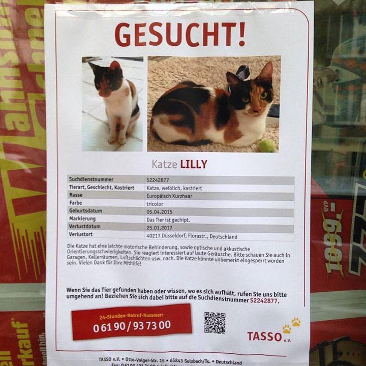 Lilly von der Florastraße wird gesucht.