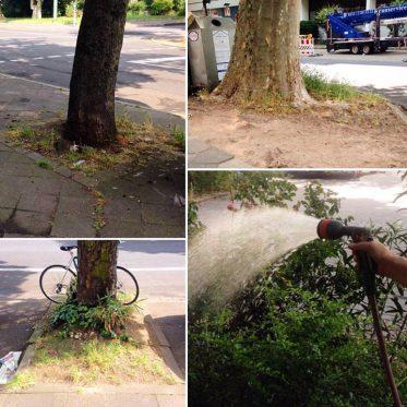 Summer in the city - Straßenbäumen einen Drink spendieren.