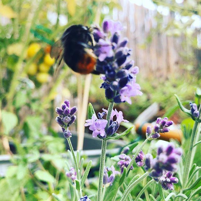 Fleißige Helferinnen bei uns im Blumenkasten - überlege schon wie und wo wir kindersicher ein Insektenhotel anbringen können...