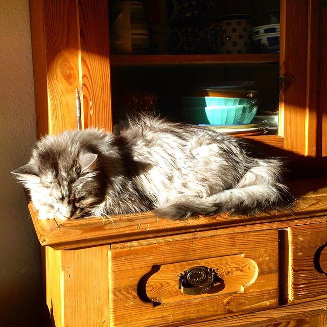 Work Life Balance haben Katzen wohl erfunden