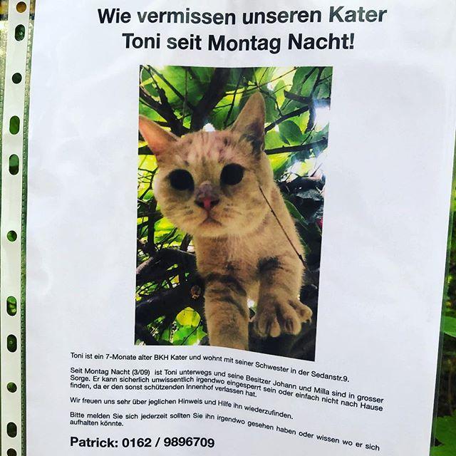 Katzen-Suchmeldung bei uns im Viertel