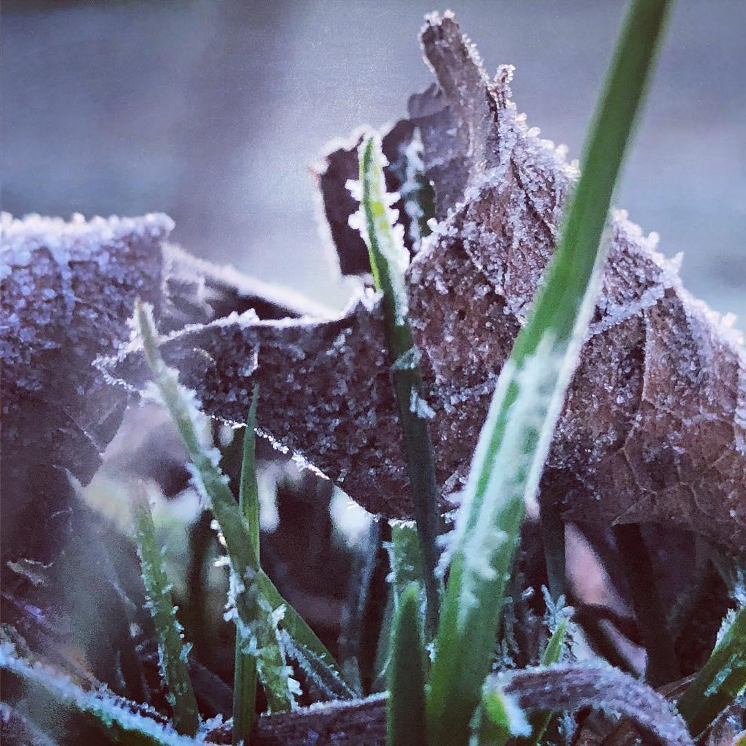 Der erste Vogelsang dringt in die Ohren und einige erste Anzeichen für einen kommenden Frühling sind auch schon zu finden :-) Aber aktuell ist es einfach nur frostig kalt an den Fingern…