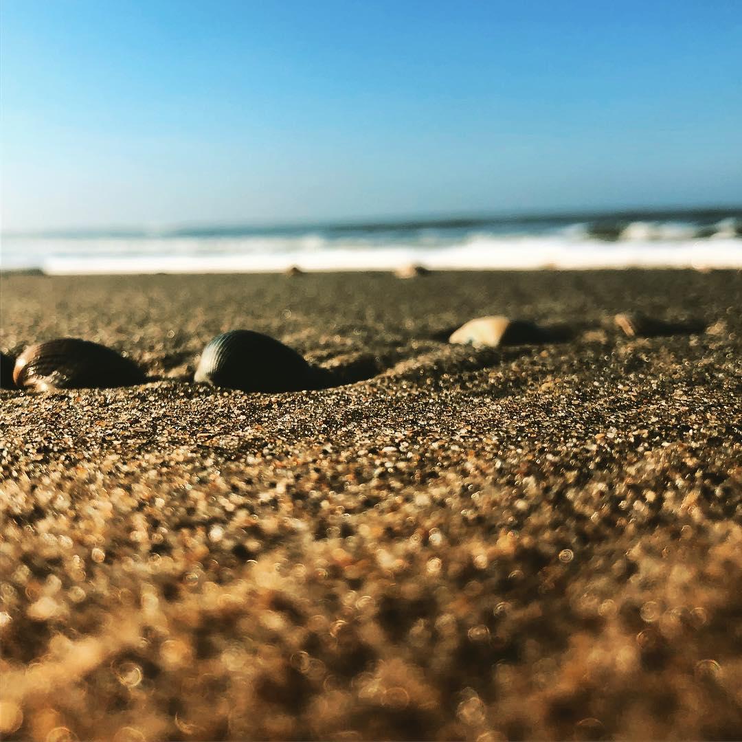 Meerblick inklusive Sonne – ein paar Tage am Strand ausspannen zwischen Möwengeschrei und balzenden Fasanen