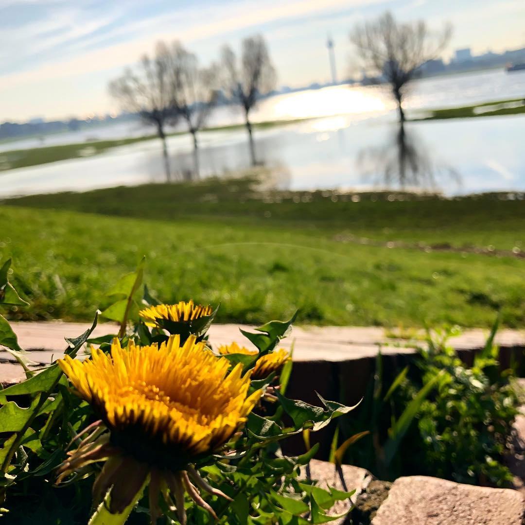 Ich mag es wenn die Frühlingssonne die ersten Blumen hervorlocken und die ersten bunten Sprenkel sich auf den Wiesen zeigen. Glaube jetzt wäre ein guter Zeitpunkt um über mehr Bienenweiden und Blühstreifen zu sprechen ;-)