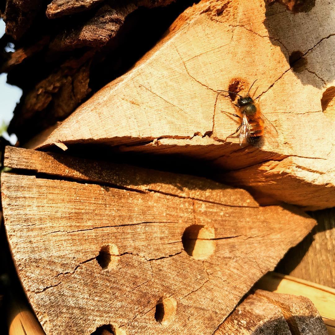Ein Herz für Wildbienen.
